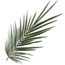 Palm Frond.png