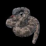 Night Snake.png