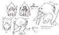 Str2 walrus concept