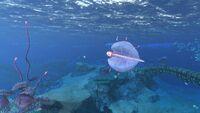 STB Bladderfish
