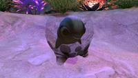 Cuddle Fish Egg Seabed
