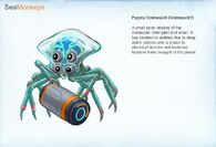 Pygmy crabsquid concept