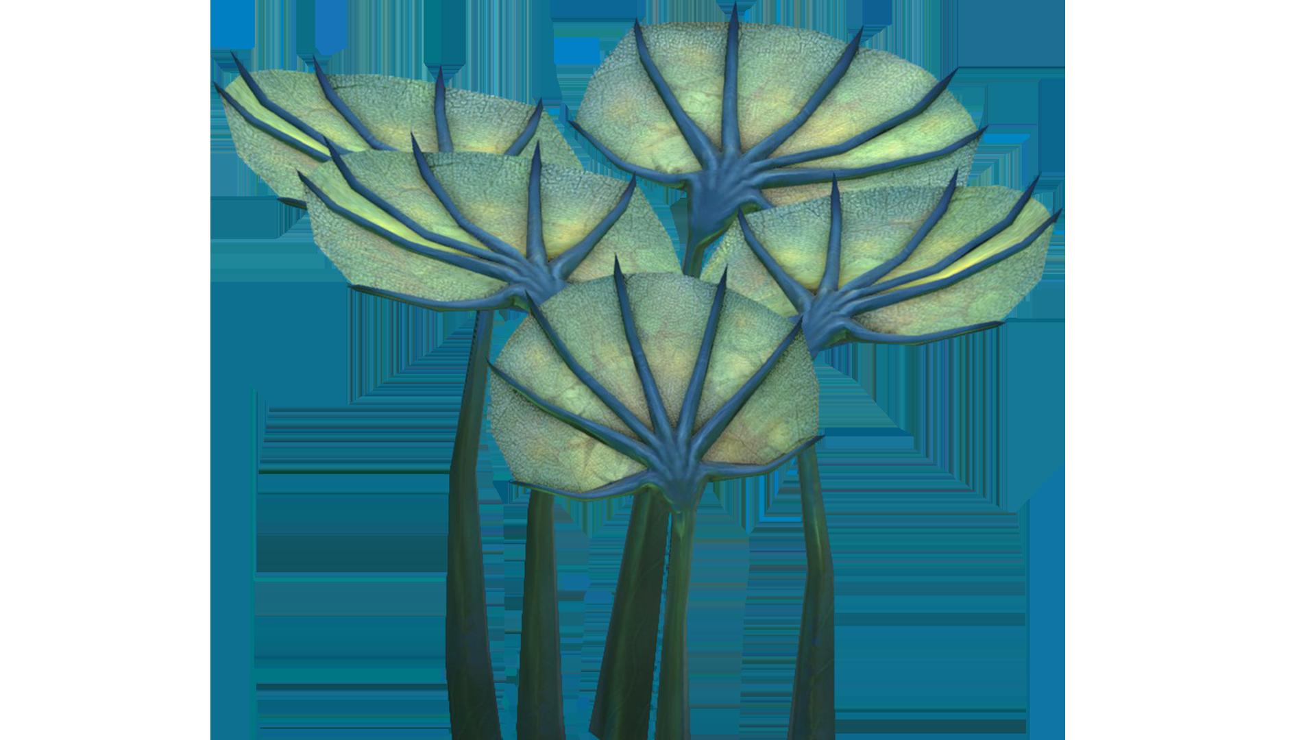 Pygmy Fan Flora.png