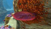 Table Coral (1).jpg