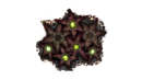 Starfish Fauna.png
