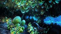 Pat-presley-cavezone-cave01-lorez