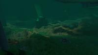 AquariumGalleryNew15