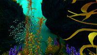 Cave Arctic Kelp Forest