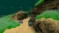 AquariumGalleryNew7