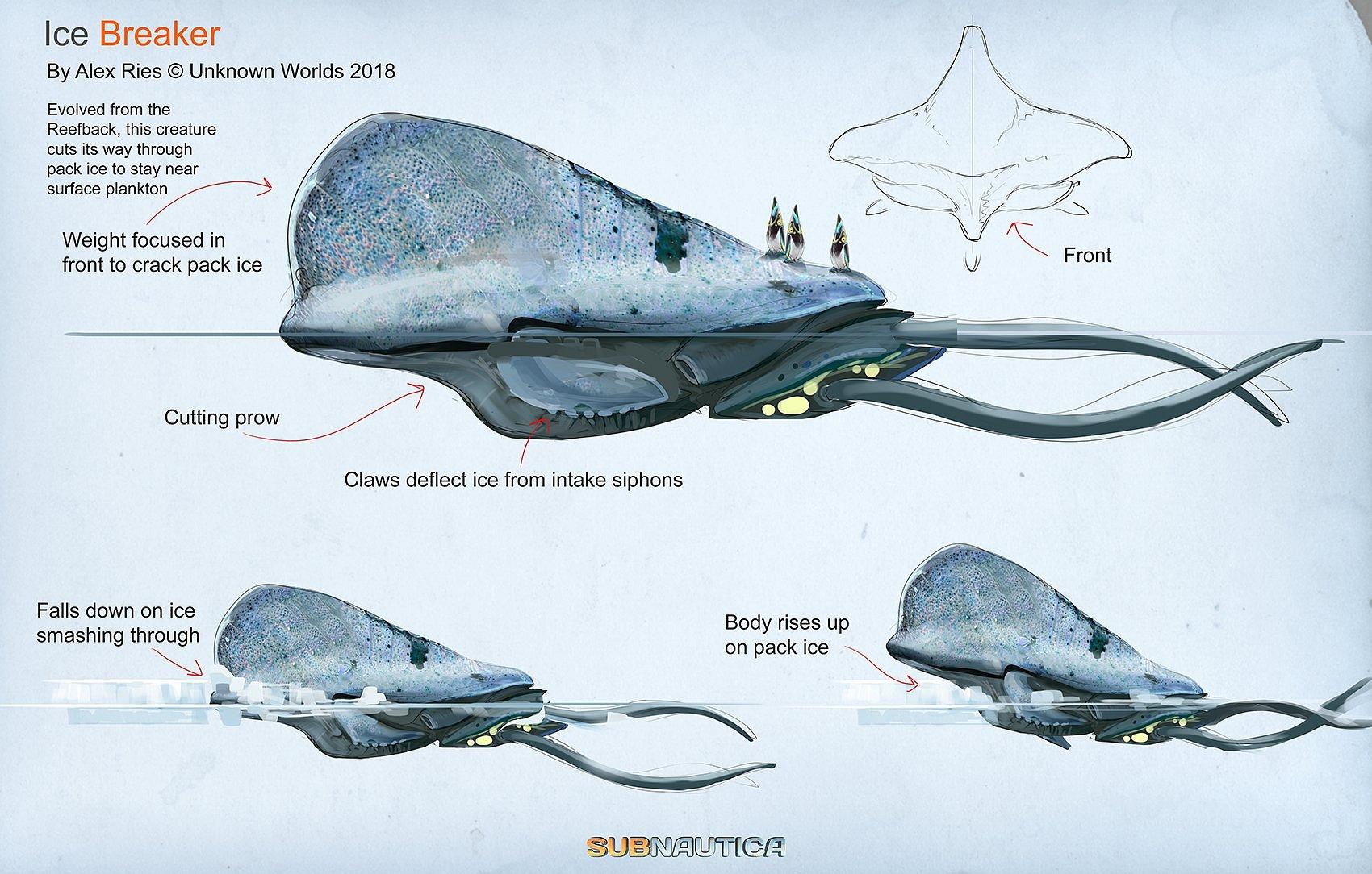Арктический рифоспин