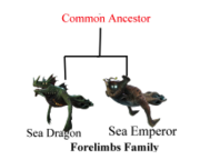 Forelimbs Family.png