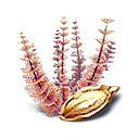 Redwort Seed Icon.png
