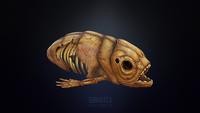 Lost River Fish Skeleton Sketchfab