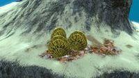 CoralShellPlate02.jpg