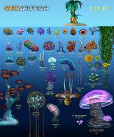 Flora List 1