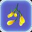 Гроздь семян водоросли.png