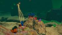 AquariumGalleryNew13