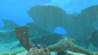 Safe Shallows Overview Day