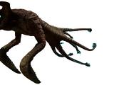 Sea Emperor Leviathan Juvenile