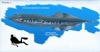 Alex-ries-alex-sharka03