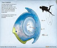 Alex-ries-alex-titanholefishb