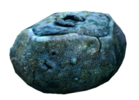Unused Reefback Coral