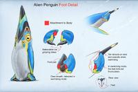 AlexRies-PenguinFoot (BZ)