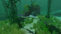 Stalker Kelp
