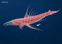 Alex Shark crustacean