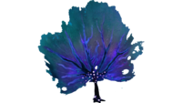 Purple Fan Flora.png