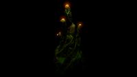 Pyrocoral Bioluminescence