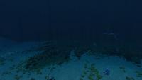 Dunes STP Transition