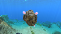 Floater on rock Gallery
