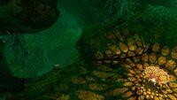 LilycaveCramped