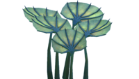 Карликовый веер Флора.png