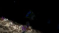 Eyeye Sea Treader's Path Night