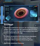 Baumegel - Datenbank