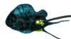 Reefback Fauna.png