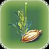 Purple Vegetable Plant Seed.png