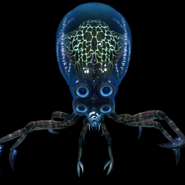 Krabośmiornica