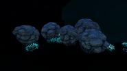 LRBF Coral Species 1