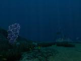 Sea Treader's Path