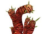 Tiger Plant