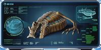 Скелет морского дракона КПК
