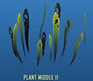 Plant Middle 11