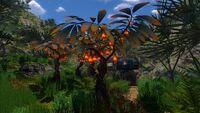 Lanterntrees