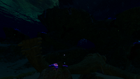 Safe Shallows Overview Night