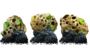 Pyromorphite Mineral.png