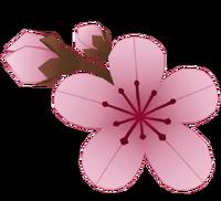Sakura1.png
