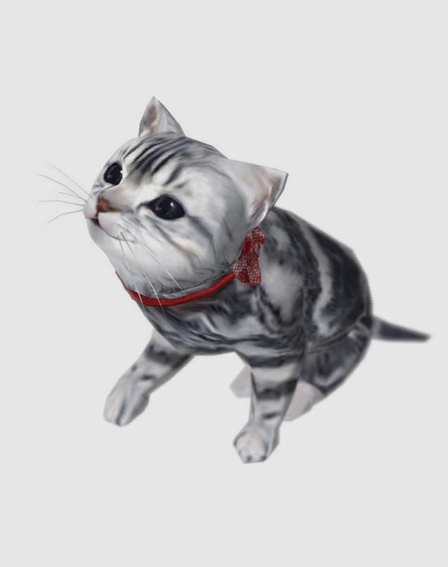 Jeane (cat)